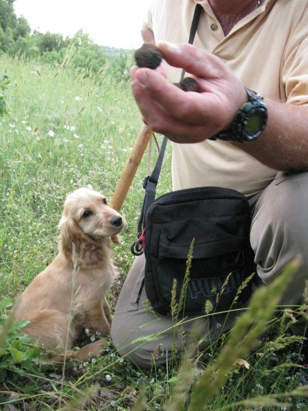 Truffle hunting, Zagori, Ioannina